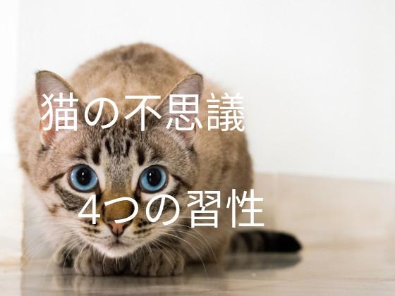 猫の4つの習性