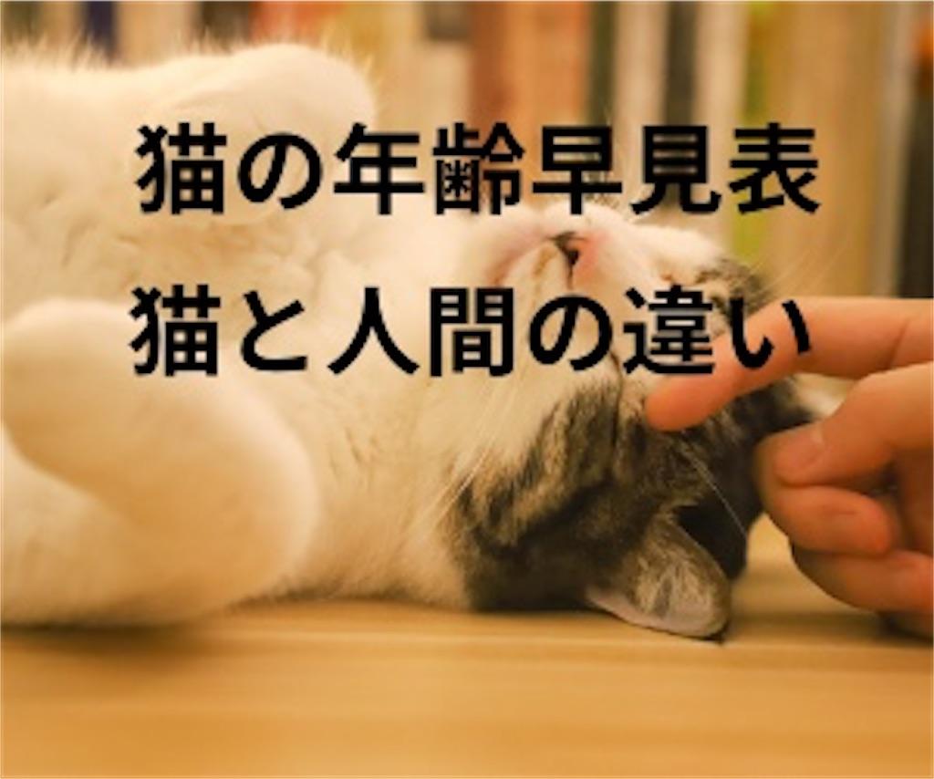 猫の年齢早見表!猫と人間の違い