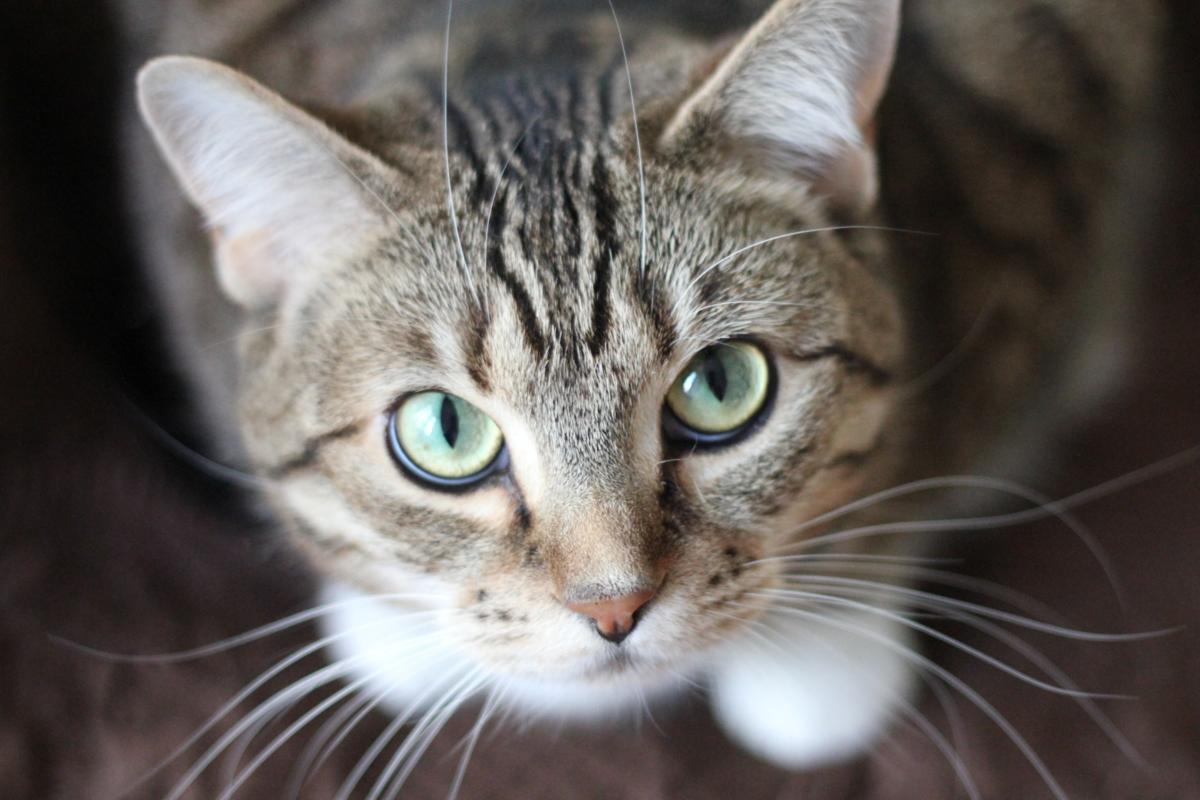 猫を飼うのにオススメできない人の環境や性格とは