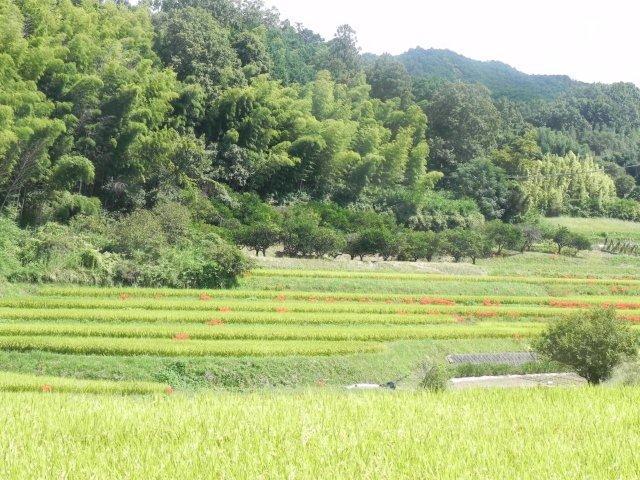 f:id:noruho-club:20120930131856j:image