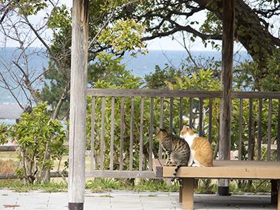 f:id:noruho-club:20171111105745j:image