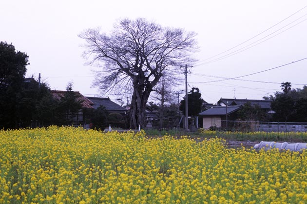 f:id:notahiro:20180407113500j:plain