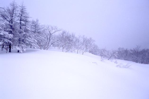 f:id:notahiro:20190119153050j:plain