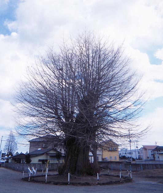 f:id:notahiro:20190306170136j:plain