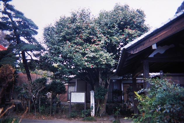 f:id:notahiro:20190306170610j:plain