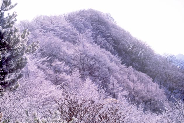 f:id:notahiro:20190320121645j:plain