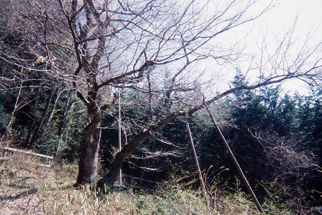 f:id:notahiro:20190411083144j:plain