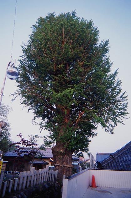 f:id:notahiro:20190411085105j:plain