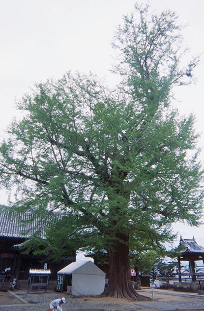 f:id:notahiro:20190417104620j:plain