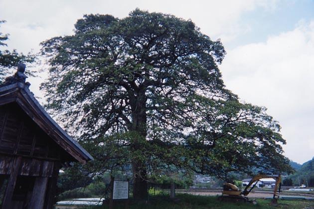 f:id:notahiro:20190417105615j:plain
