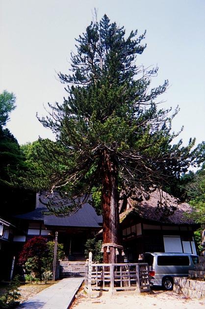f:id:notahiro:20190505104335j:plain