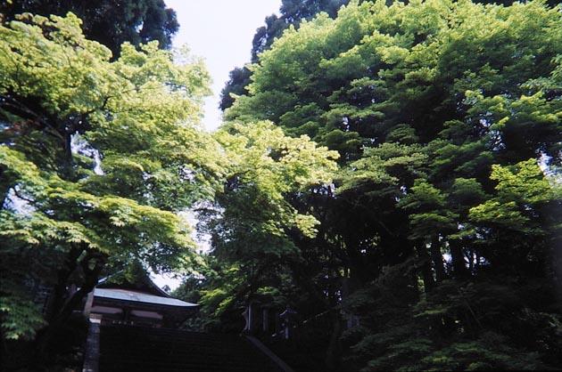 f:id:notahiro:20190506081931j:plain