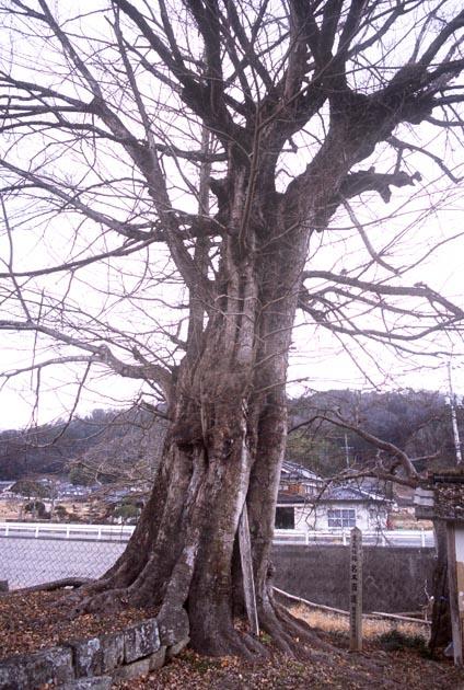 f:id:notahiro:20200109124237j:plain