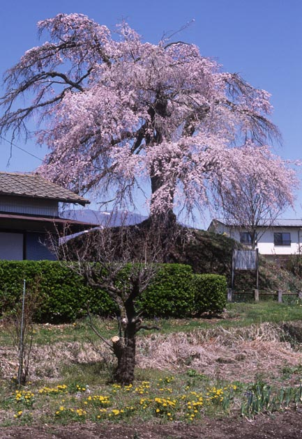 f:id:notahiro:20200416141425j:plain