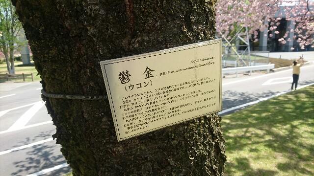 f:id:nounaikaikaku:20170430175907j:image