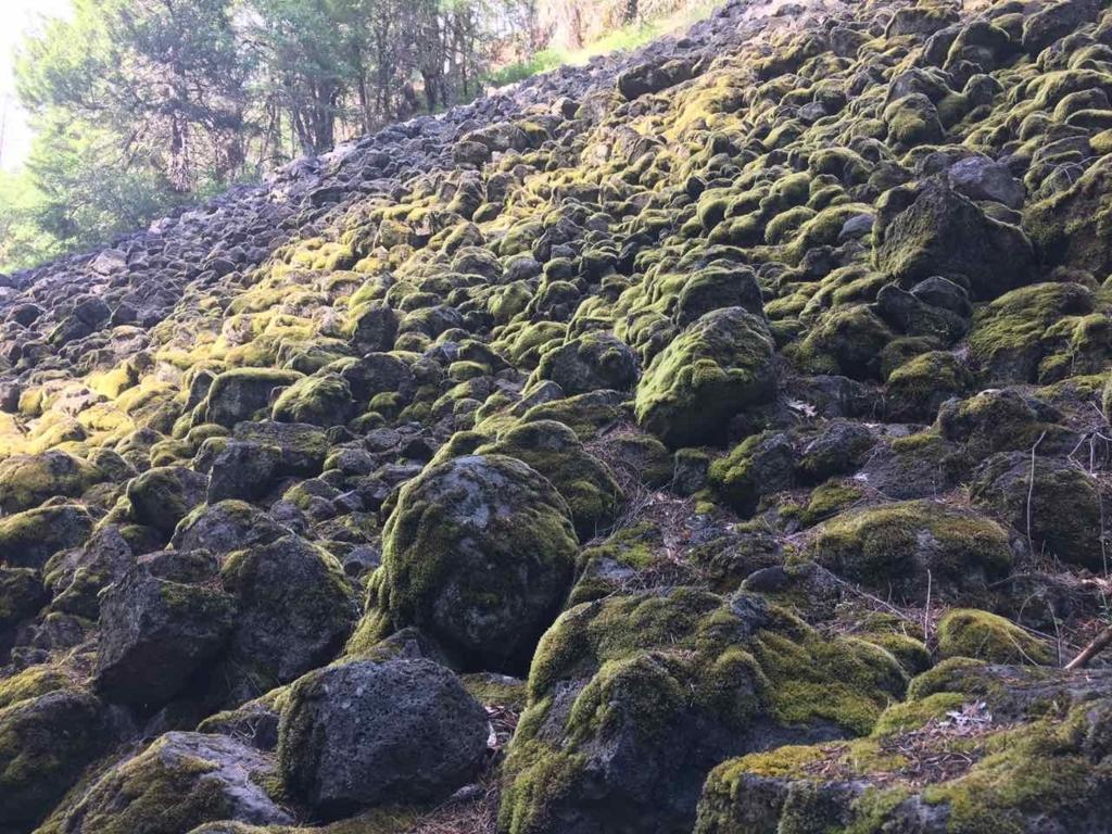 Burney Fallsのハイキング