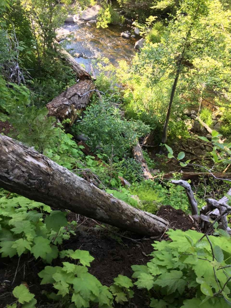 Hatchet Fallsへ続く道