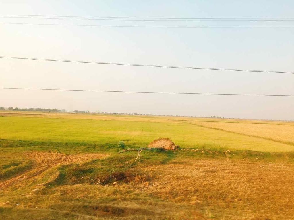 カンボジア 田園風景