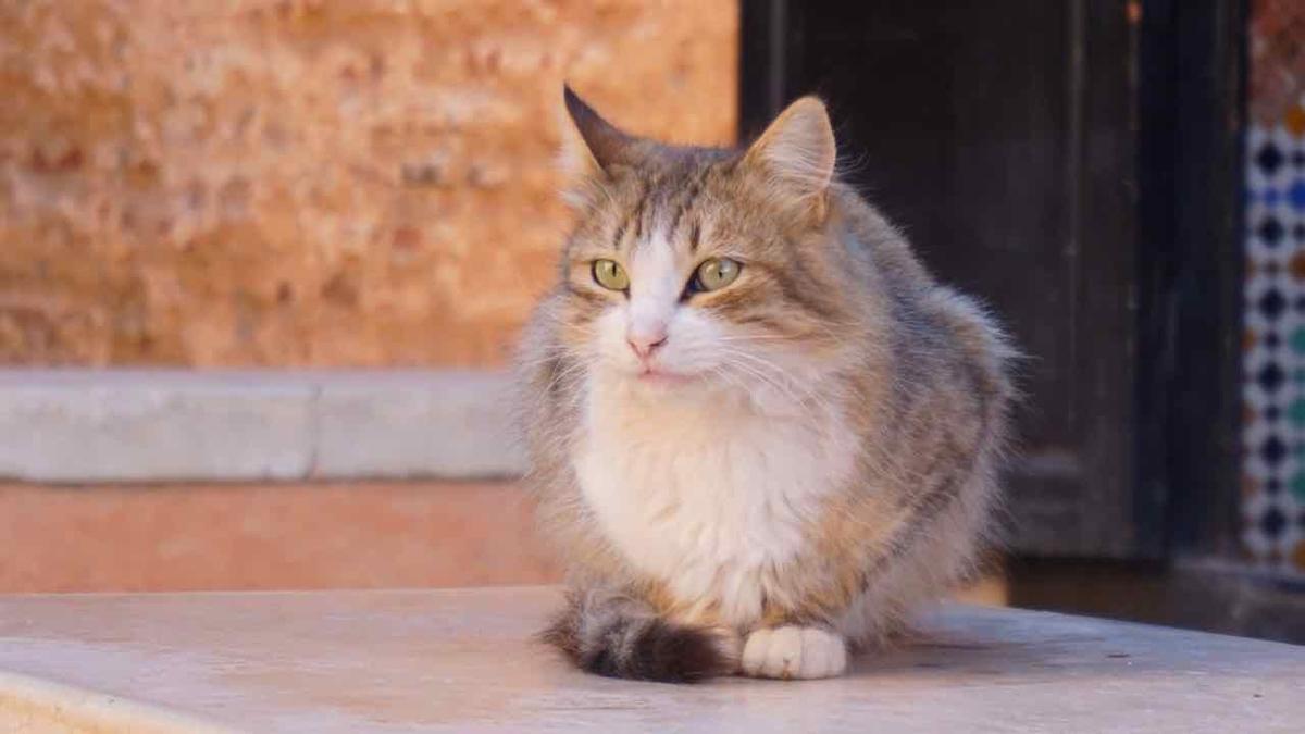 エルバディ宮殿 猫