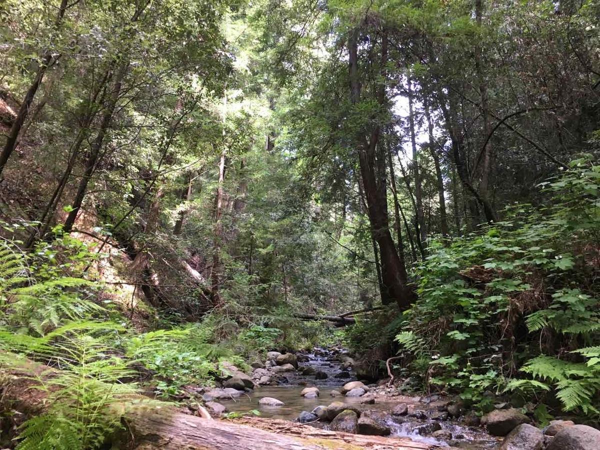 カリフォルニア ハイキング
