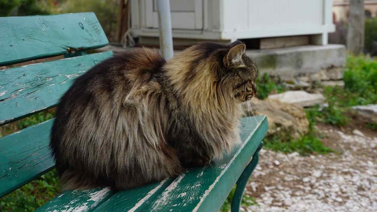 ギリシャの猫