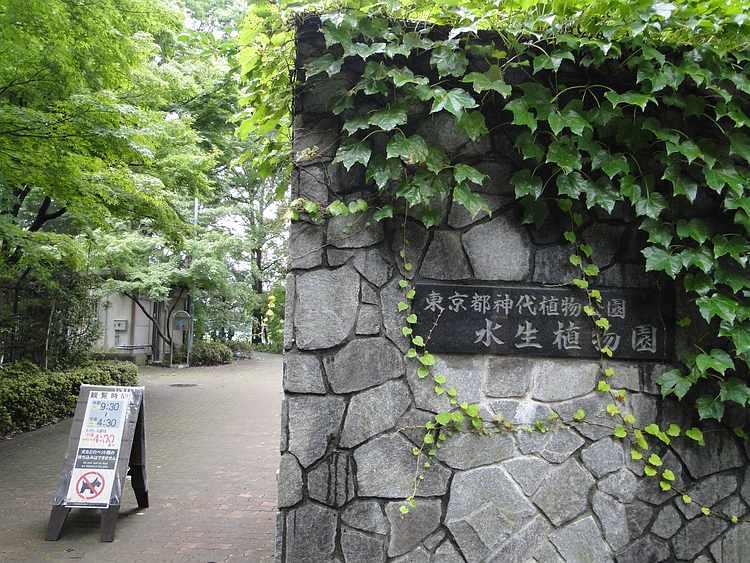 f:id:noyama_ko:20200716183424j:plain