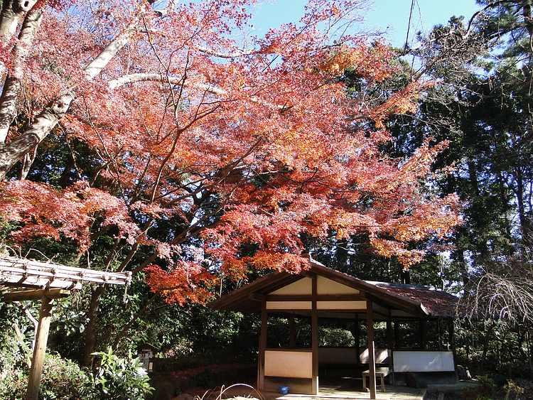 f:id:noyama_ko:20201221175416j:plain