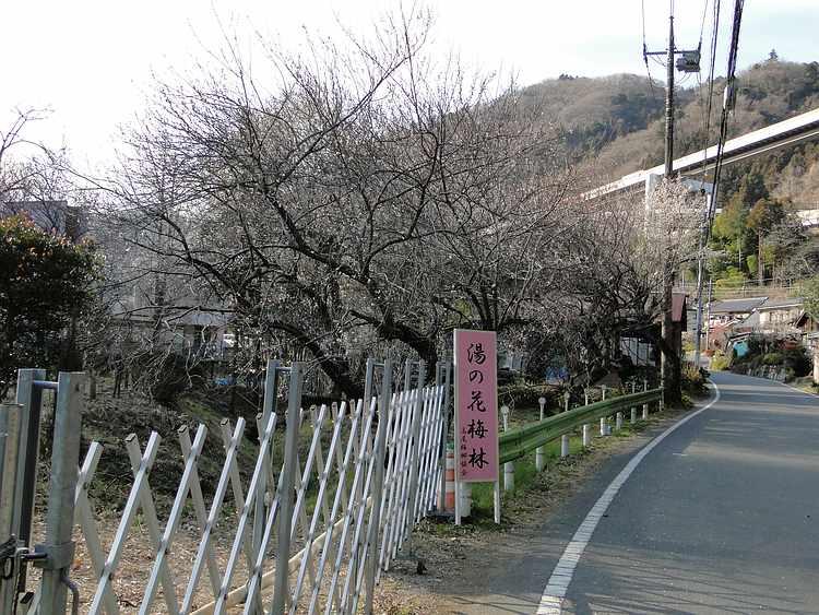 f:id:noyama_ko:20210225205239j:plain