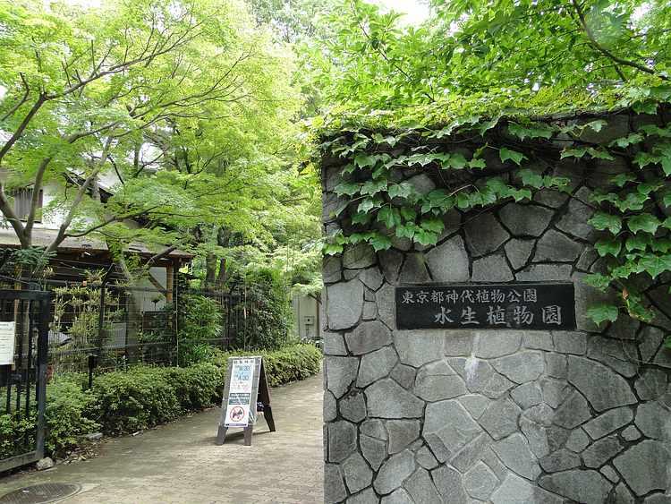 f:id:noyama_ko:20210630144827j:plain