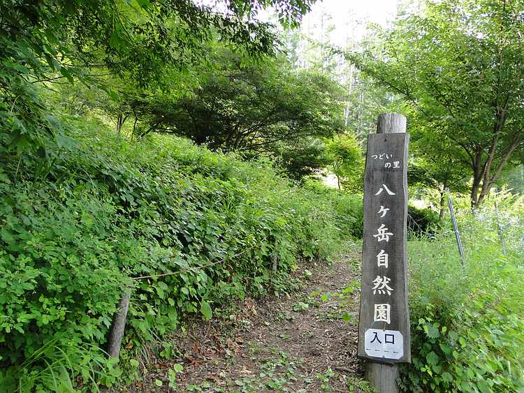 f:id:noyama_ko:20210727105937j:plain