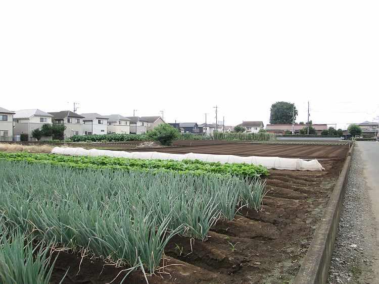 f:id:noyama_ko:20210822195908j:plain