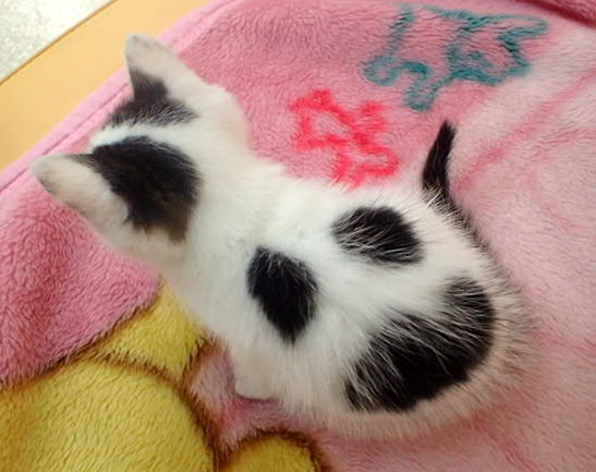 f:id:nozawa_clinic:20160614111451j:plain