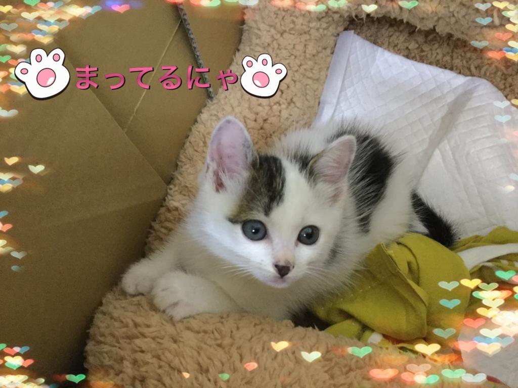 f:id:nozawa_clinic:20160614151451j:plain