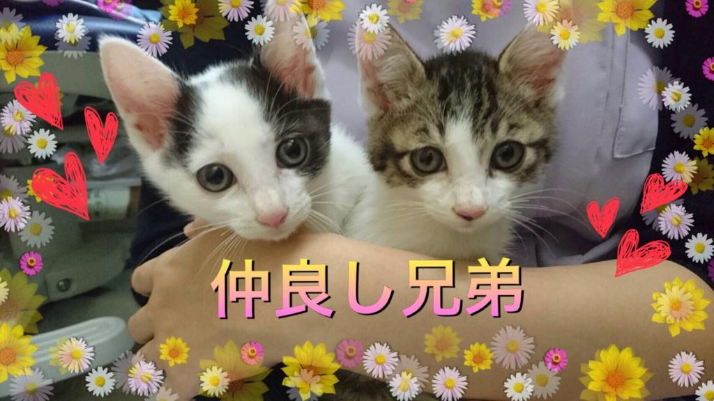 f:id:nozawa_clinic:20160621104457j:plain