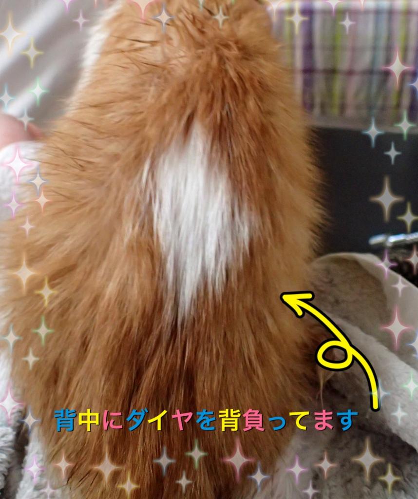 f:id:nozawa_clinic:20160630115036j:plain