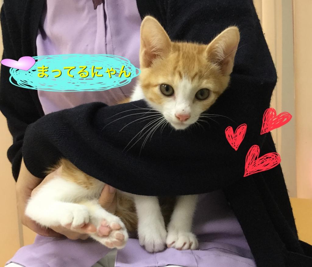 f:id:nozawa_clinic:20160630121129j:plain