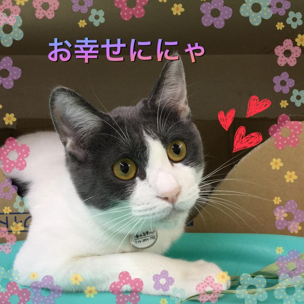 f:id:nozawa_clinic:20160721175501j:plain