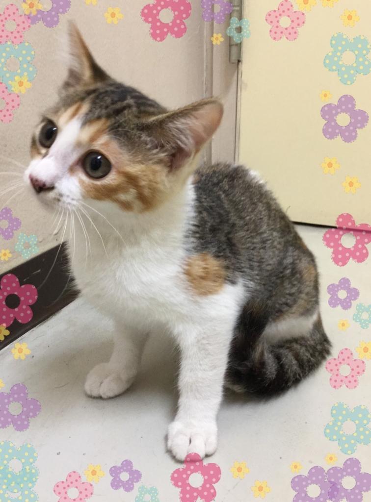 f:id:nozawa_clinic:20160722172029j:plain