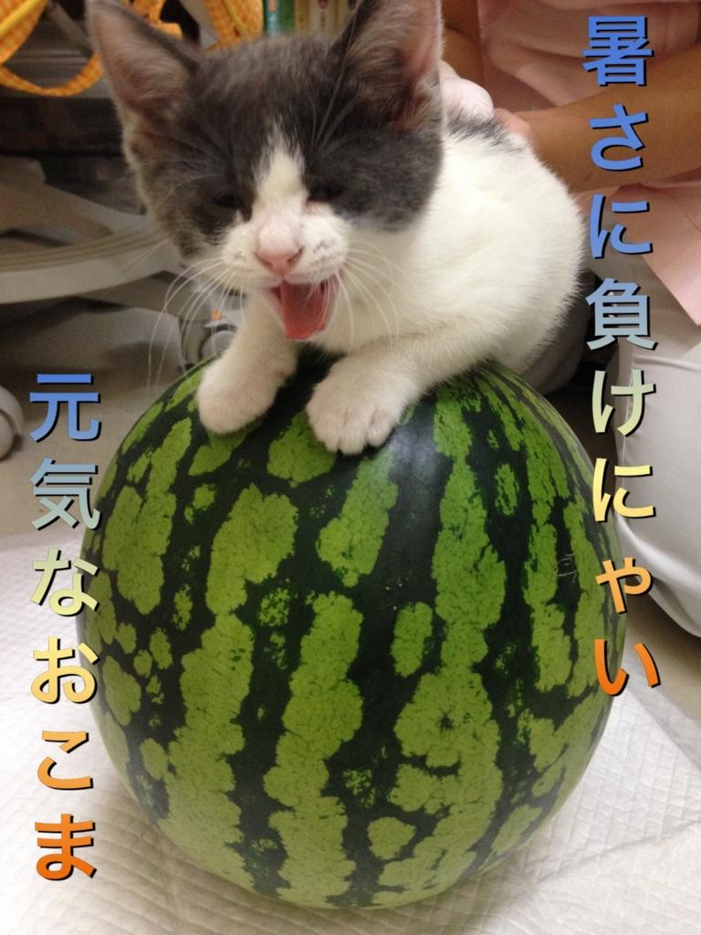 f:id:nozawa_clinic:20160809175526j:plain