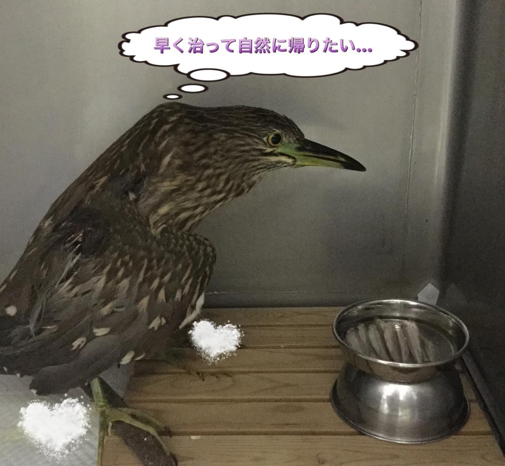 f:id:nozawa_clinic:20160826180541j:plain