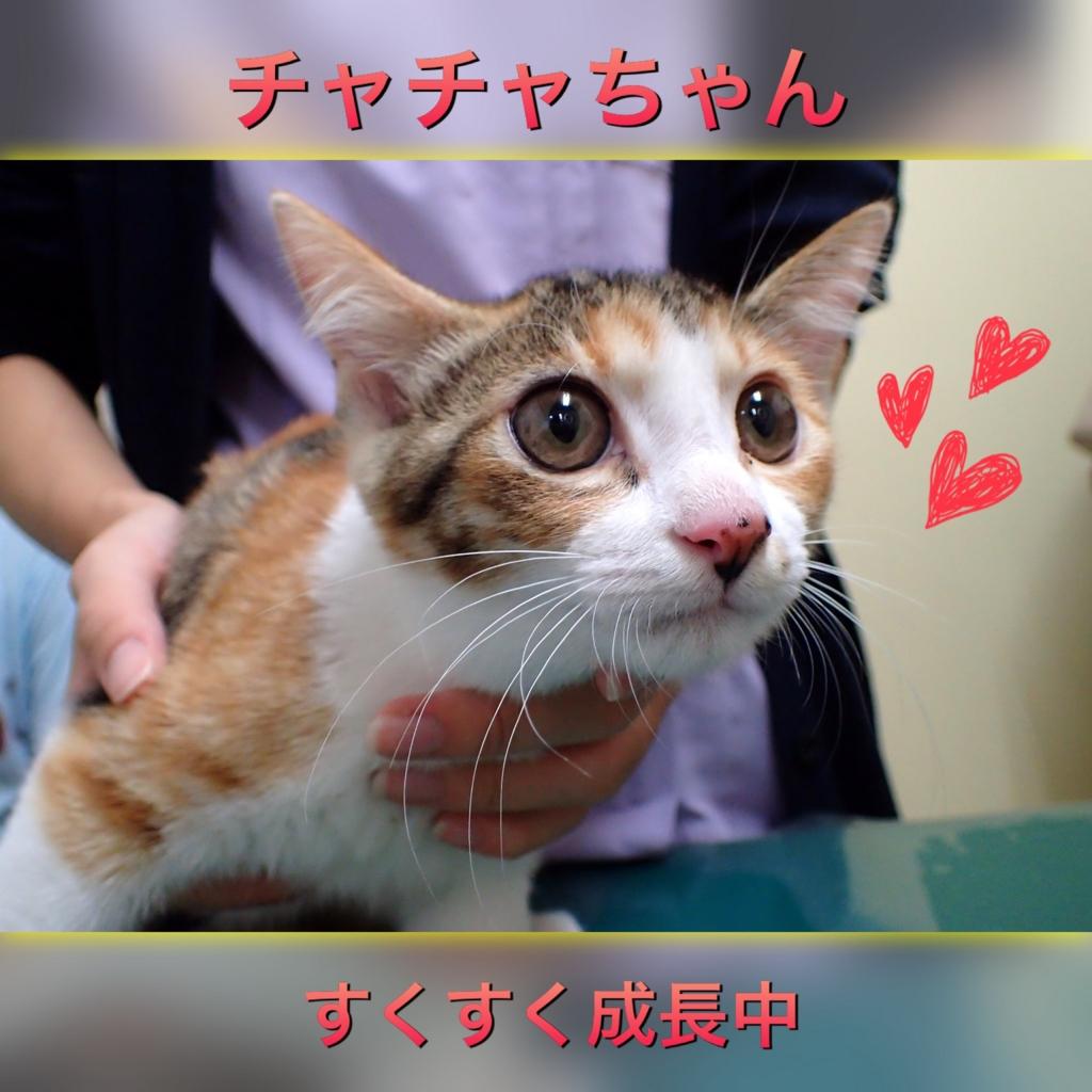 f:id:nozawa_clinic:20160827104601j:plain