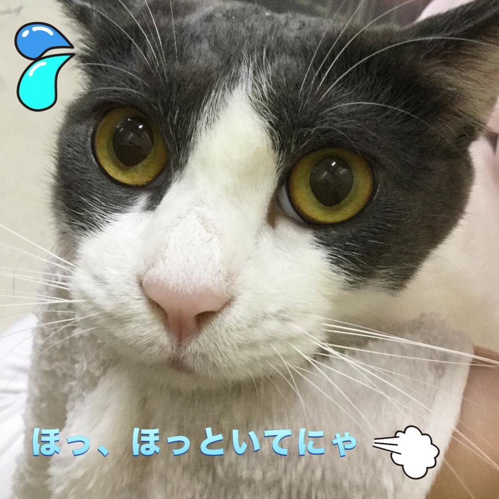 f:id:nozawa_clinic:20160907174034j:plain