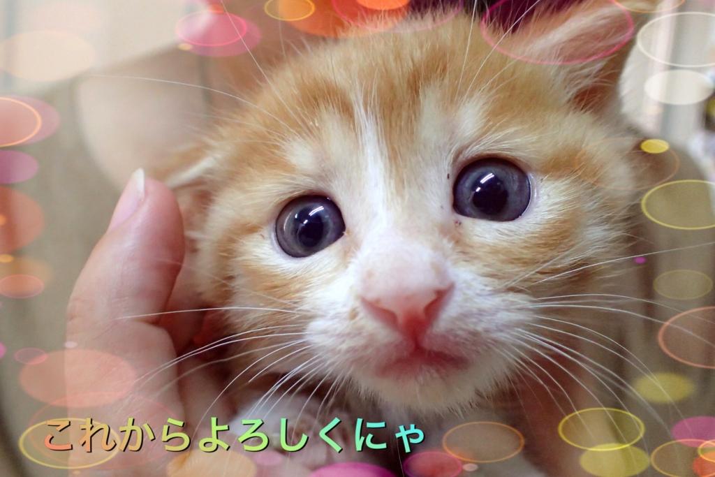 f:id:nozawa_clinic:20160907175522j:plain