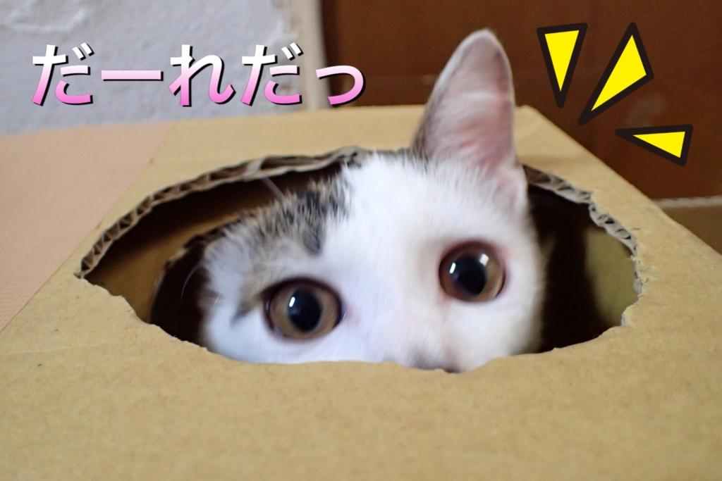 f:id:nozawa_clinic:20160915153824j:plain