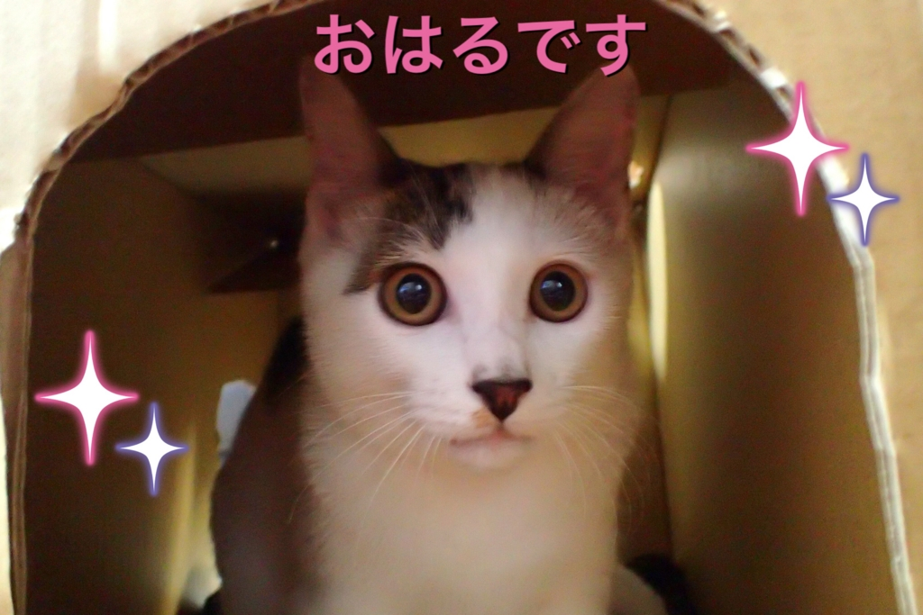 f:id:nozawa_clinic:20160915154425j:plain