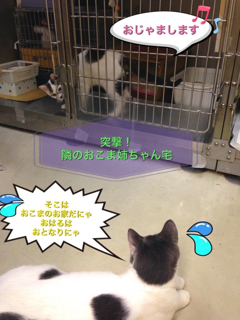 f:id:nozawa_clinic:20160915164247j:plain