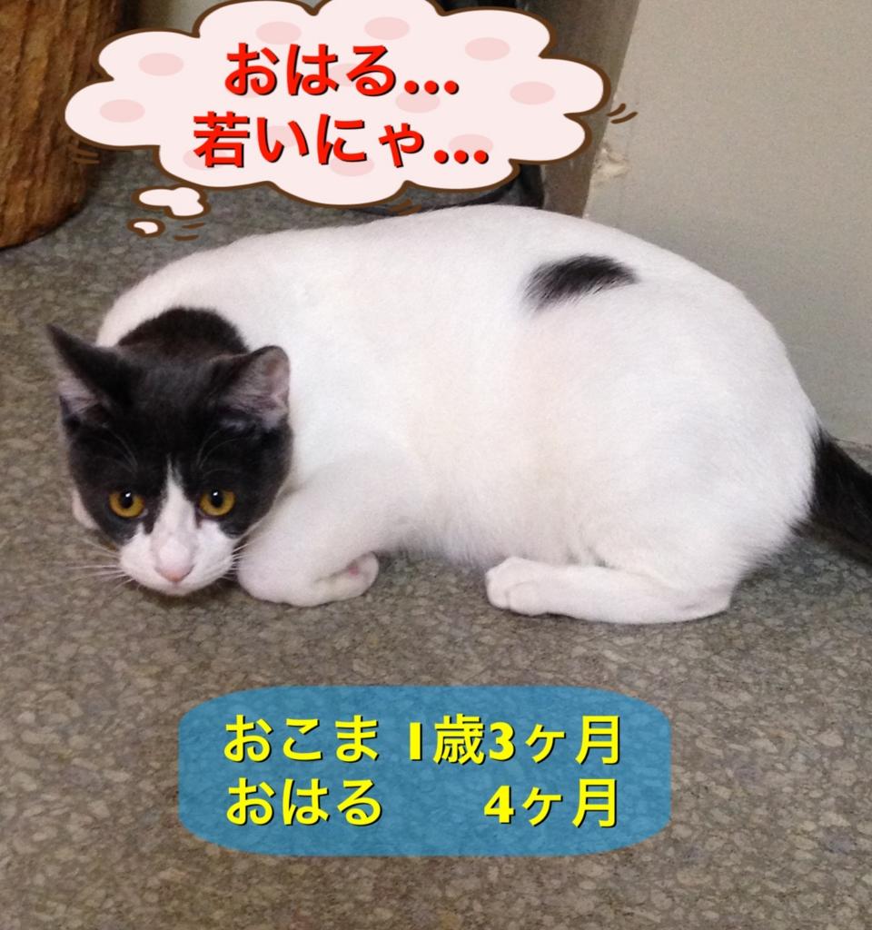 f:id:nozawa_clinic:20160915165434j:plain