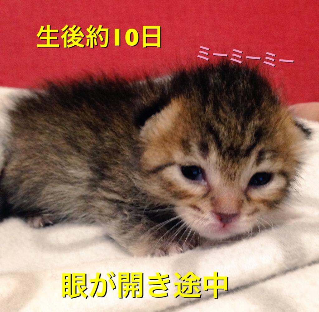 f:id:nozawa_clinic:20160915170017j:plain