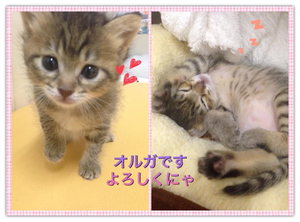 f:id:nozawa_clinic:20160930153433j:plain