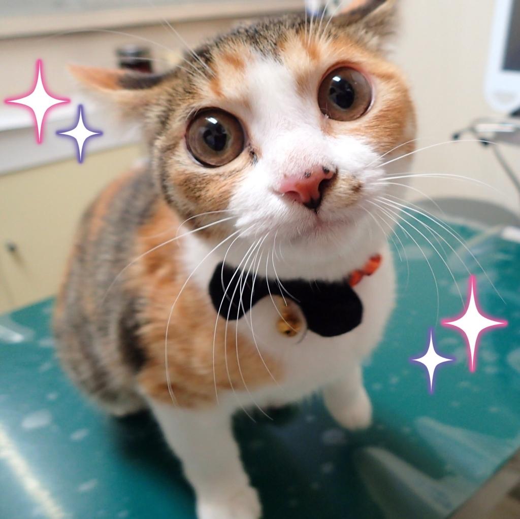f:id:nozawa_clinic:20161028174107j:plain